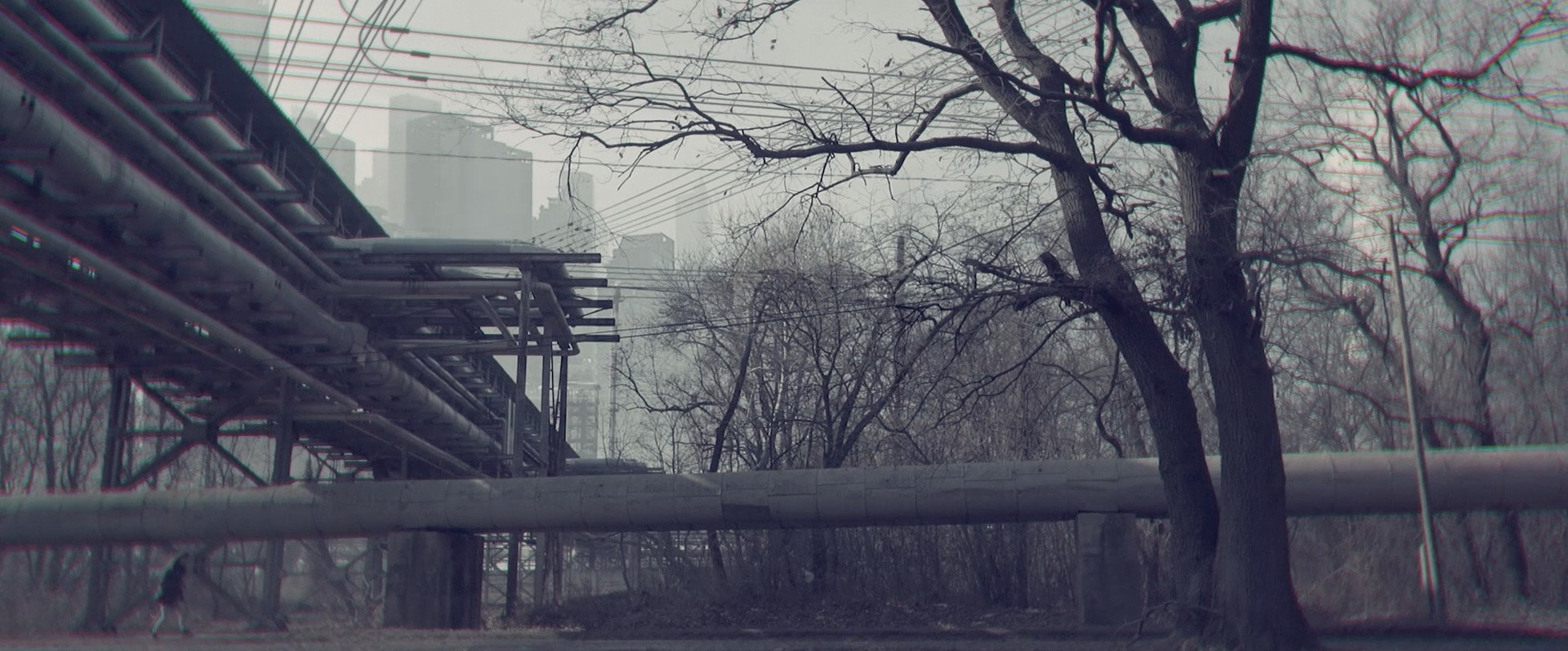 ▷ The Swan - short film